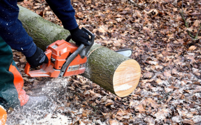 Rehab Cost Estimation: Tree Removal Cost